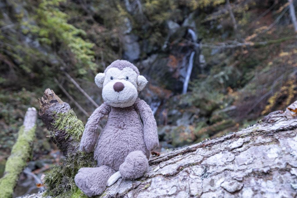 Affe vor dem Wasserfall im Breuergraben